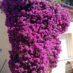 Se ofrece Jardinero económico teléfono 660021177 atiendo whatsapp