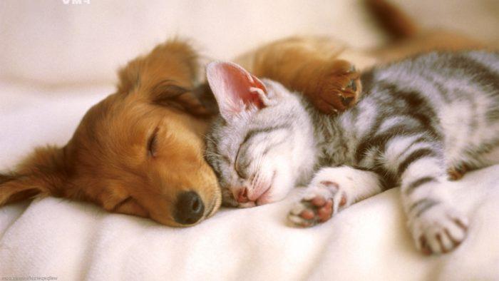 3 profesiones para los amantes de los animales