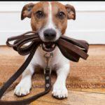 Paseo y cuido perros a domicilio