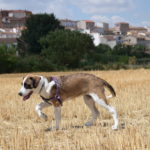 Cuidadora / Paseadora de mascotas
