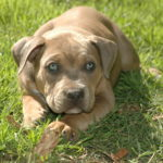 Paseadora canina