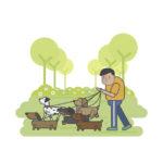 Paseador/a canino fin de semana