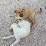 Paseo/cuidado de perritos verano