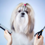 Perruquer/a cani a centre veterinari