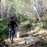 Busco trabajo como paseador de perros