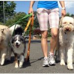 Buscamos paseador o paseadora canina