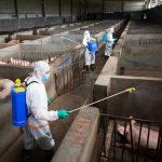 Buscamos higienistas para granja porcina