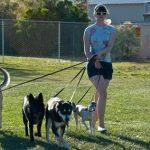 Necesitamos alguien para pasear a nuestros perros