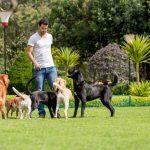 Paseador de perros para varios perros